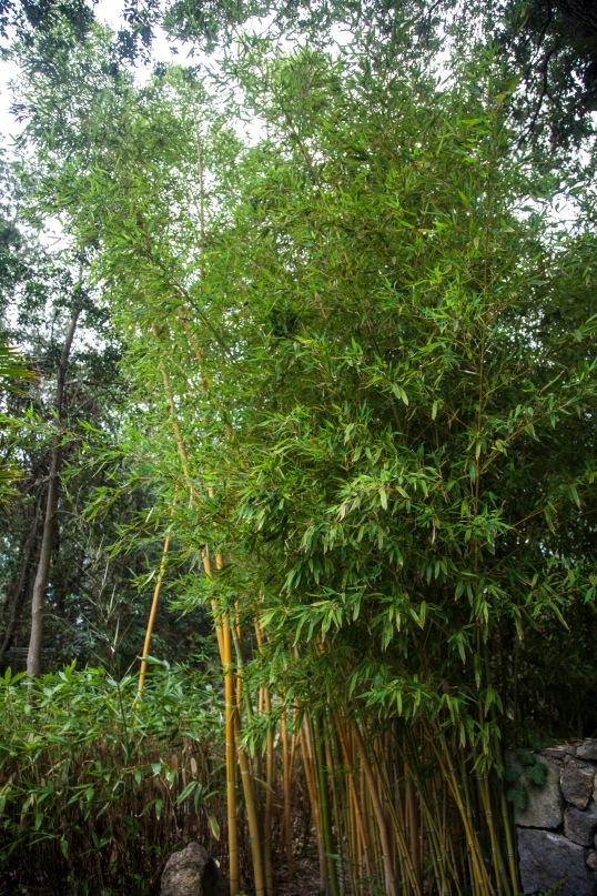 La Mortella - Bamboo