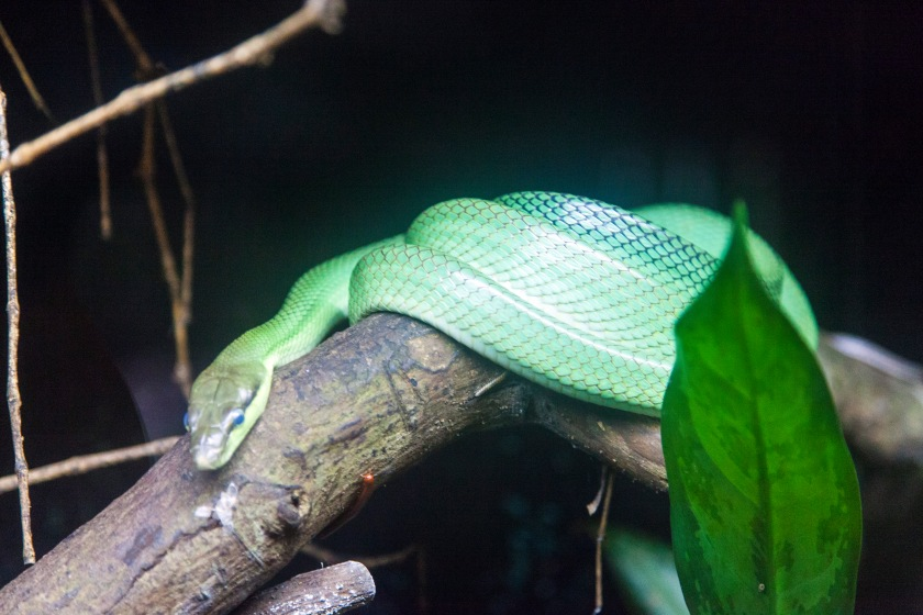 Some Green Snake