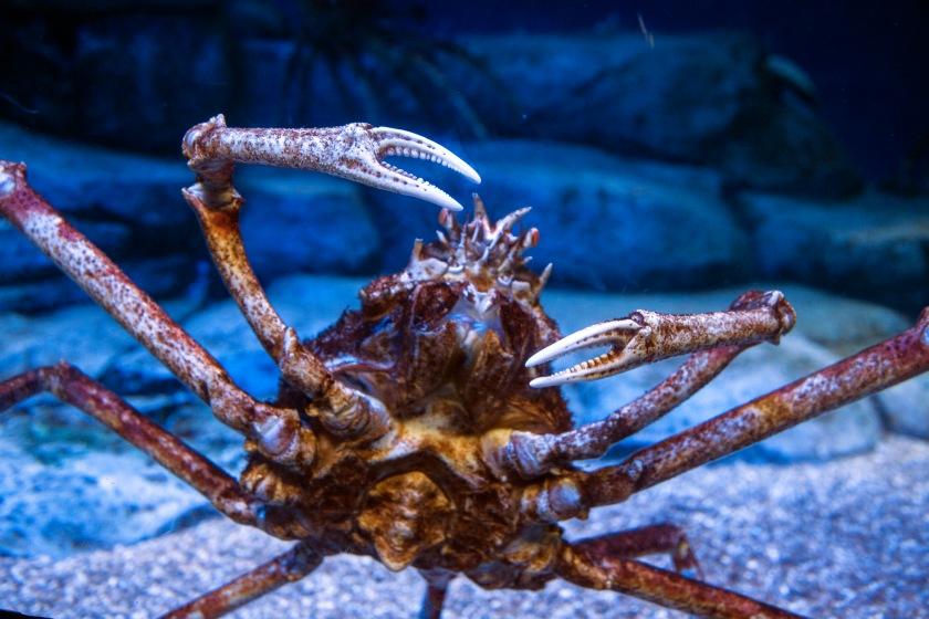 Some Crustacean